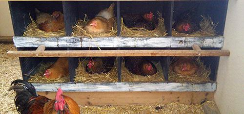 Full nests